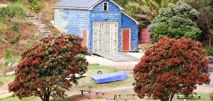 Little Oneroa boatshed 300x142 - Gallery