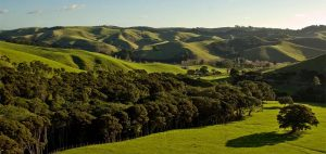 Looking east over Waiheke farmland 300x142 - Gallery