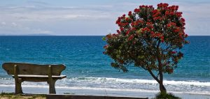 Onetangi beach and pohutukawa in flower 300x142 - Gallery