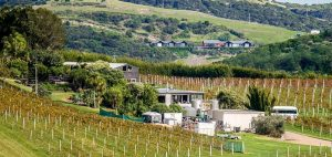Te Motu winery restaurant and vineyard 300x142 - Gallery