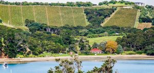Te Whau vineyard and restaurant behind Putiki Bay 300x142 - Gallery