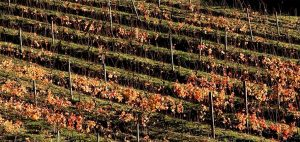 Winter at Vina Del Mar vineyard 300x142 - Gallery