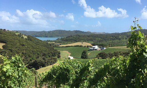 Destiny Bay Vineyard and Winery - Wineries