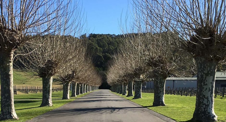 mission estate winery driveway in winter